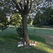 hiroshima-remembrance tree-victoria-park-finchley