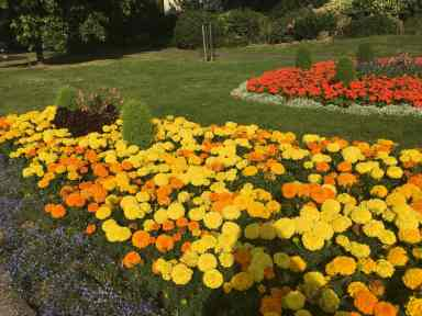 victoria-park-flower-beds-ballards-lane