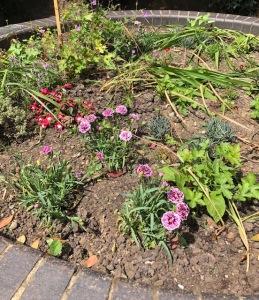 sensory-garden-flowers